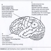 Neural Systems for Reading